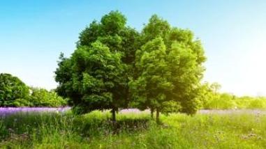 વૃક્ષ વાવે બીજા