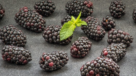 Black berry Amazing Facts