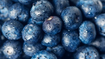 Blue Berry Amazing  Facts