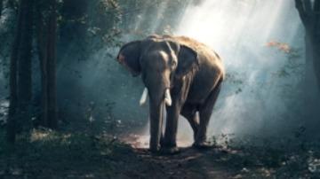 Eli the elephant