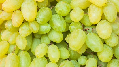 Grapes Amazing Facts