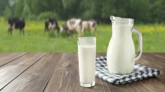 Milk Amazing Facts