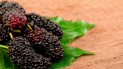 Mulberry Amazing Facts