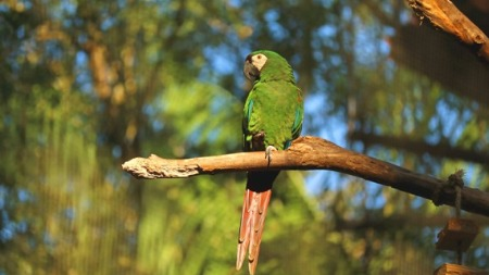 Parrot and the Tree
