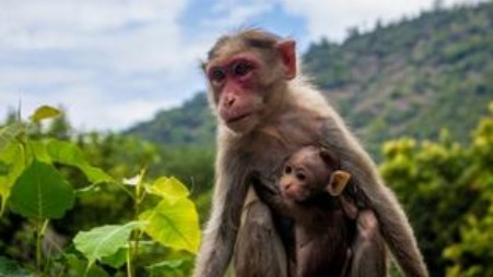The Cap-seller and The Monkeys