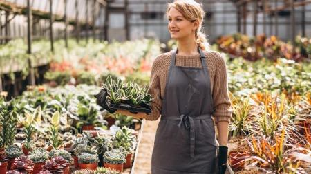 The Witty Gardener