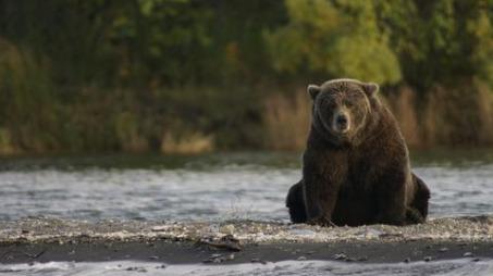 The bear and the honey pot