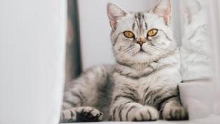 The selfish cat