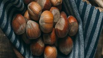 Chestnut Amazing Facts
