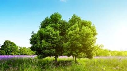 એક વૃક્ષે માંડી વારતા