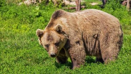The Foolish Bear