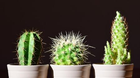 Kind Cactus